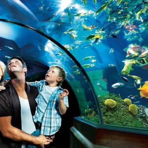 Opplev en verden under vann i LEGOLAND® ATLANTIS by SEA LIFE™.