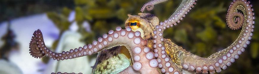 Blekksprut på Kategatscenteret