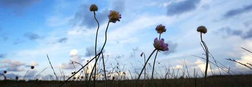 Blå natur og blå september