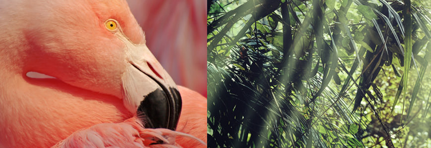 Flamigo og palme