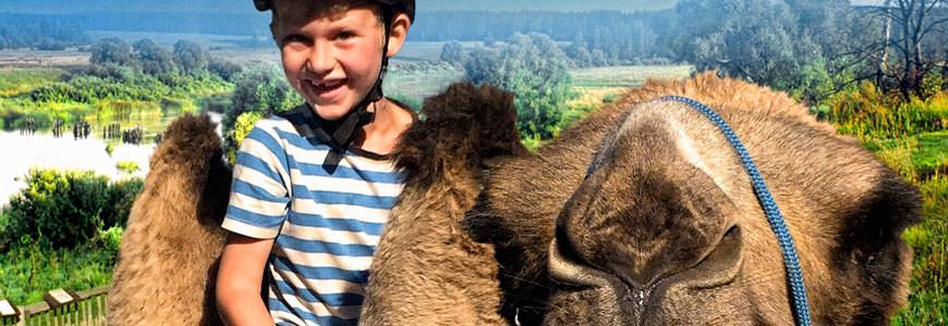 Gutt på kamel