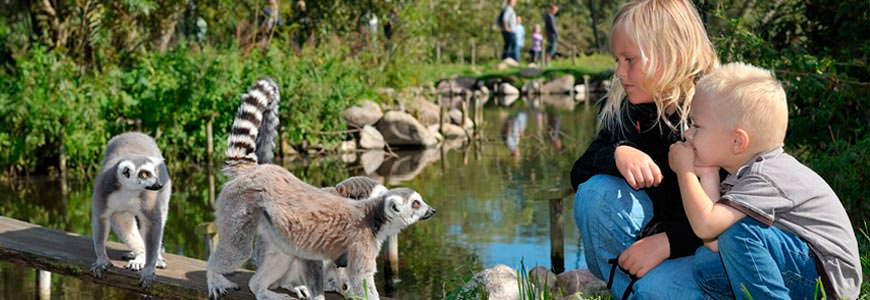 Lemurer og barn