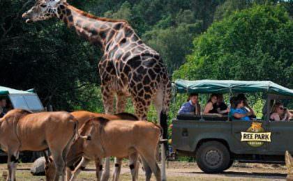 Safari i Ree Park med biler, dyr og mennesker